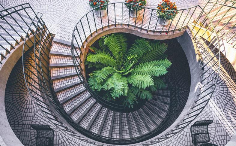 Eine Palme steht im engen Lichtschacht einer gefliesten Wendeltreppe, Draufsicht