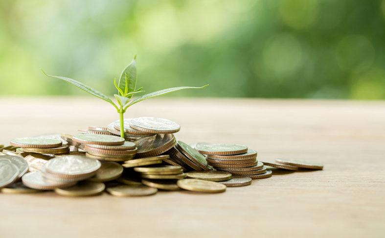 Ein kleiner Berg goldener Münzen, aus dem ein junges Pflänzchen wächst.